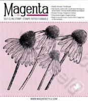 Fall Echinacea
