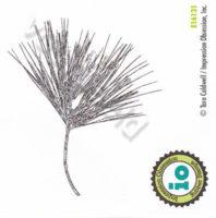 White Pine Sprig