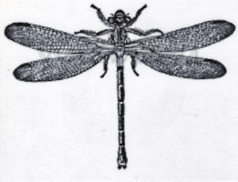 Beeswax - Large Dragonfly