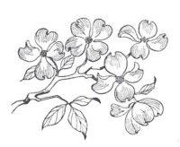 I Brake for Stamps - Dogwood Blossoms