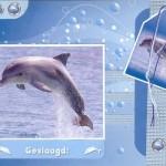 dolfijn scrap