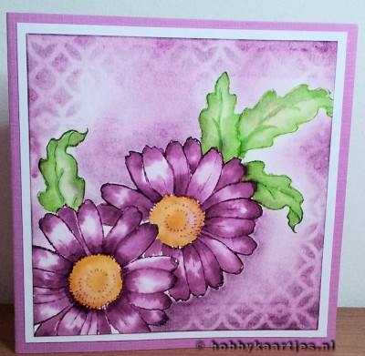 Cling Daisy Mix van Stampendous