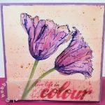 groten tulpen