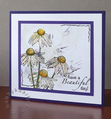 Magenta Echinacea