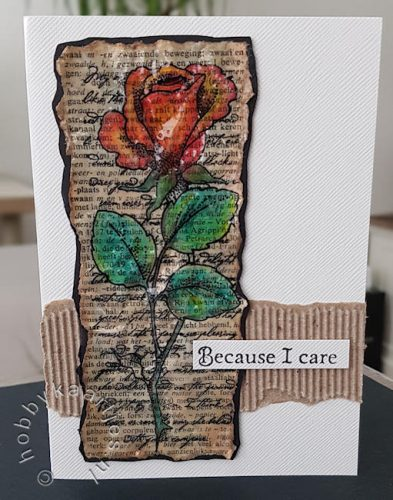 Chocolate Baroque - Rose Stem Script