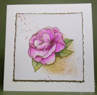 Happy Hybrid Rose